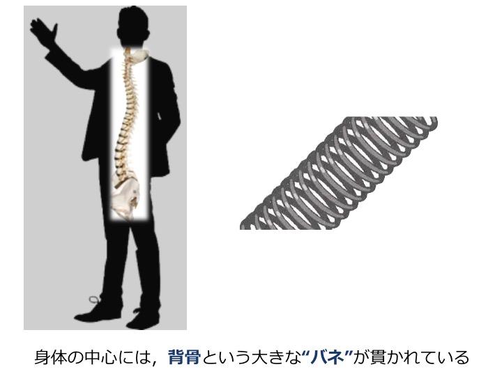 背骨のバネ