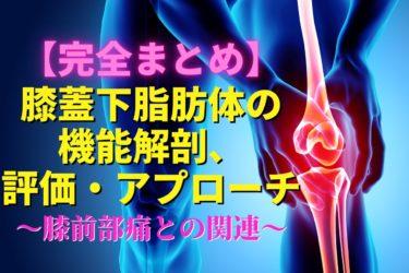 膝蓋下脂肪体の機能解剖と膝前部痛のまとめ|理学療法士が使える評価・治療