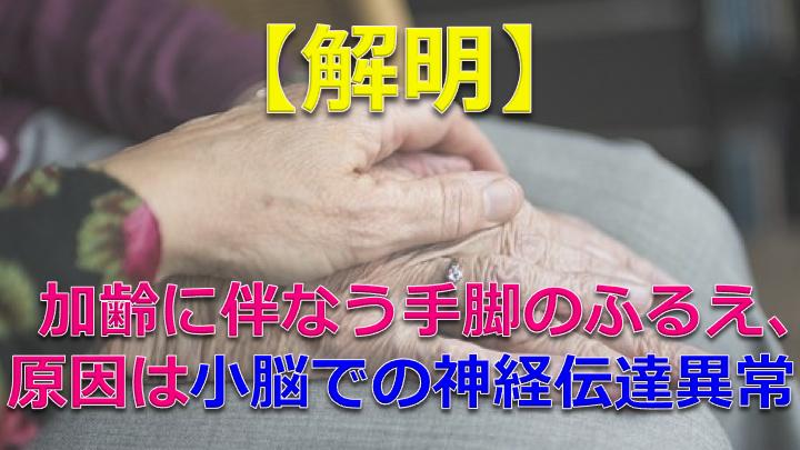 """【解明】高齢者にみられる""""手脚のふるえ"""" 原因は小脳での神経伝達の異常"""